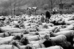 01  Redyk. Szczawnica 1972